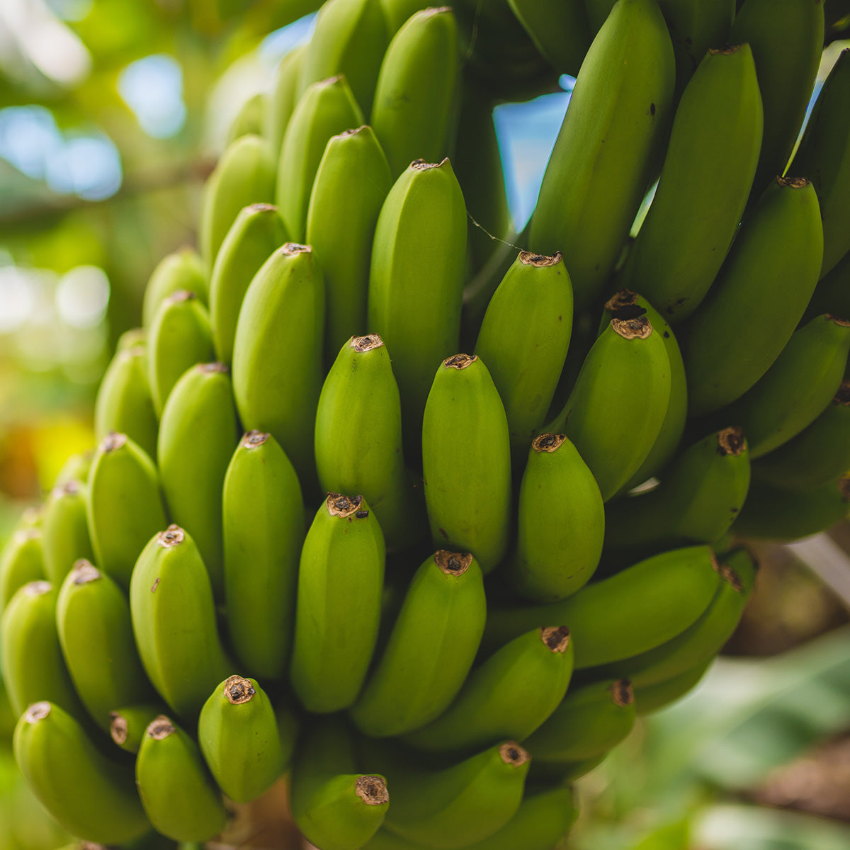 buy organic bananas online fruit box london uk