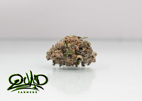 Blunicorn Flower ***New Drop March 24*** Grown in House