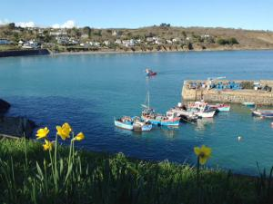 Artist Joanne Short loves the spring sunshine and daffodils in Coverack, Cornwall