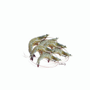 Brunei White Shrimp