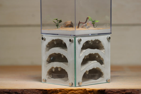 Casita III (Light Blue 107)
