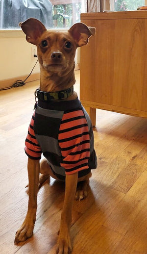 Orange Striped Dog Tee size Small