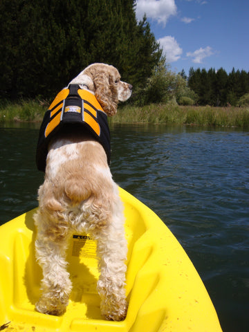 Dogs with lifejackets