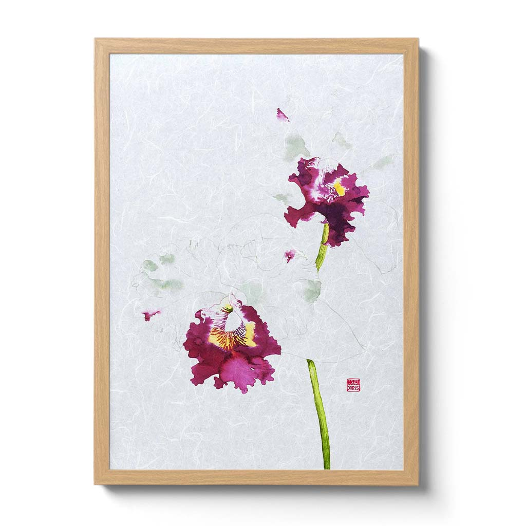Cattleya Blc. Memtiang-Lim Orchid Fine Art Print by Artist Chris Chun. This white orchid is printed on handcrafted Japanese Unryu Paper.