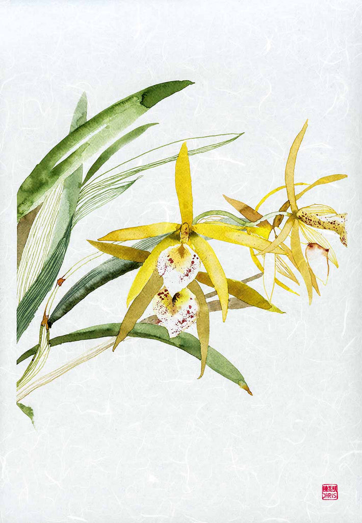 Dendrobium Hybrid Orchid Fine Art Print. Printed on Handcrafted Japanese Unryu Paper.