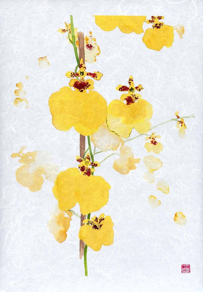 Oncidium Sweet Sugar Orchid Fine Art Print by artist Chris Chun. Archival Print on Awagami Handcrafted Unryu Paper.