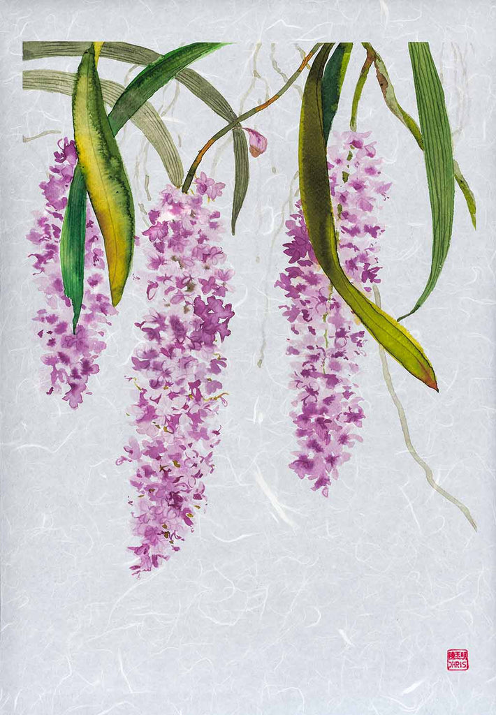Rhynchostylis Retusa Orchid Fine Art Print by artist Chris Chun. Archival Print on Awagami Handcrafted Unryu Paper.