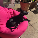 Susan, the dog, on a pink beanbag in the sunshine.