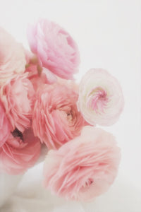 Pink ranunculus flowers spring wall art photography