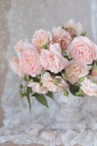 Blush pink peach apricot roses art photography wall decor