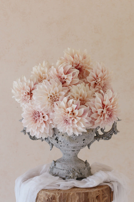 Cafe au Lait dahlias arranged in a vintage style urn. Pink blush cream