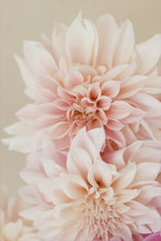 Load image into Gallery viewer, cafe au lait pink dinner plate dahlia wall art photography macro closeup
