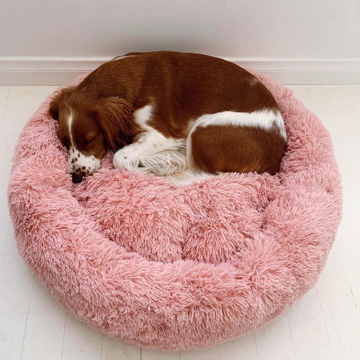 Cosy Calming Dog Bed