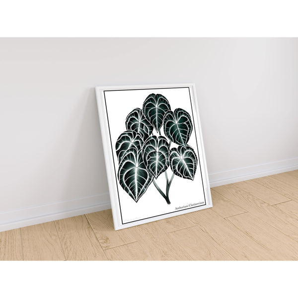 Anthurium Clarinervium artwork in white frame