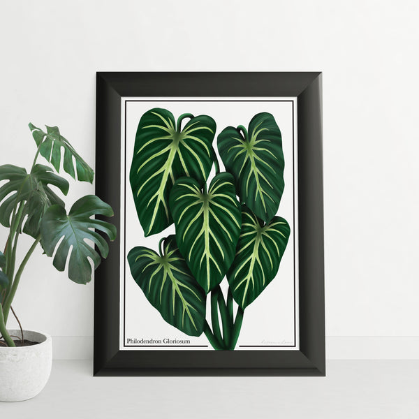 Philodendron Gloriosum - Luxe Foliage