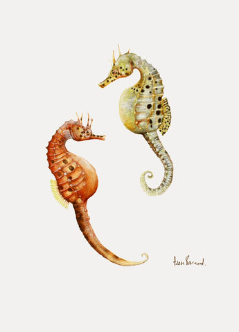 'Pot Bellied Sea Horses (Hippocampus abdominalis) by Helen Barnard