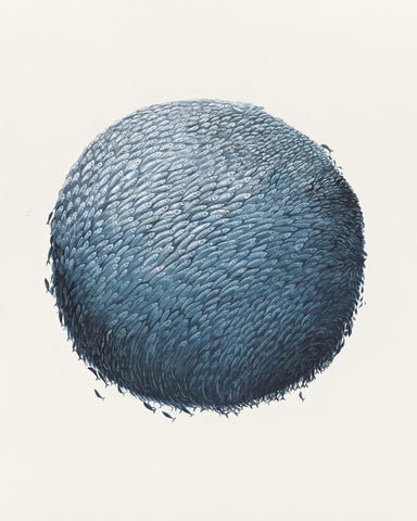 'Bait Ball (Jack Mackerel)' by Helen Barnard