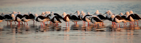 Banded Stilts by Bob Wickham