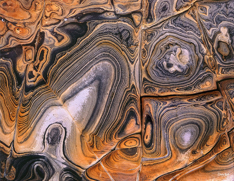 Rock Swirls and Shells by Chris Bell