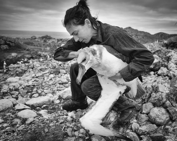 Dr Rachael Alderman, On Albatross Island 2015 by Matthew Newton