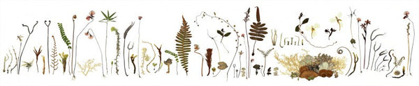 Buttongrass Botanicals Wall Frieze