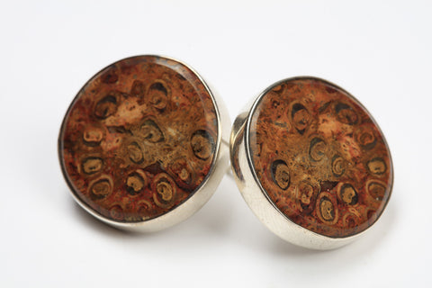 Fossilised Tree Fern Earrings