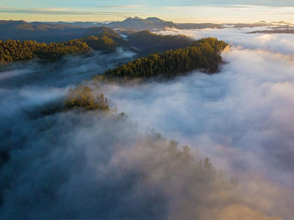 Tarkine Valley Mist by Rob Blakers