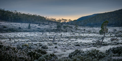 Frozen Moorland, Mt Field by Loic Le Guilly