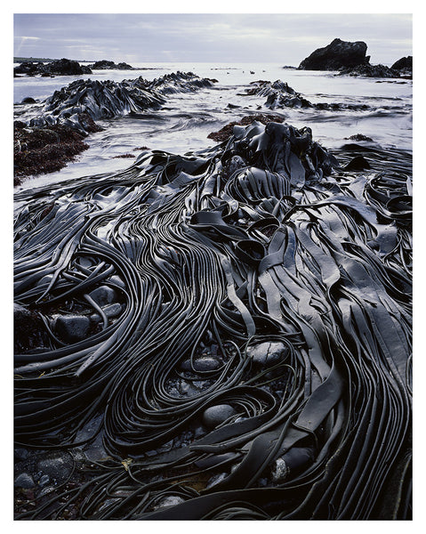 Giant Kelp by Peter Dombrovskis