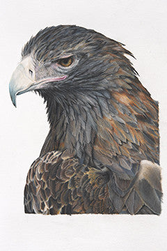 Fyona Storer Fine Art Print Wedge-Tailed Eagle