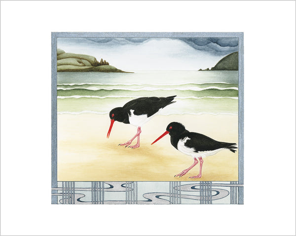 Birds of Tasmania Pied Oyster Catchers