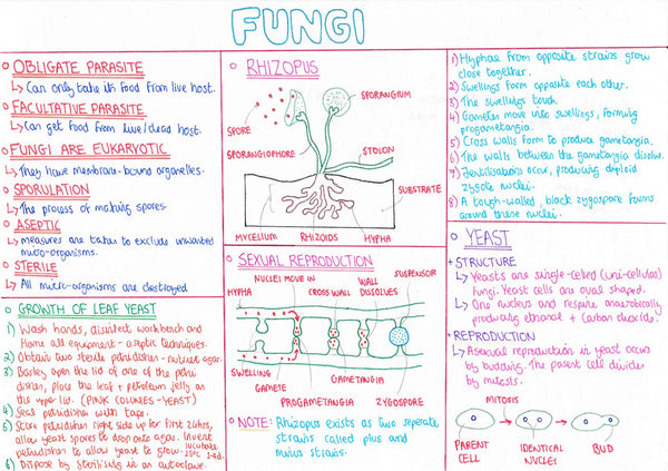 LCL - Biology Notes