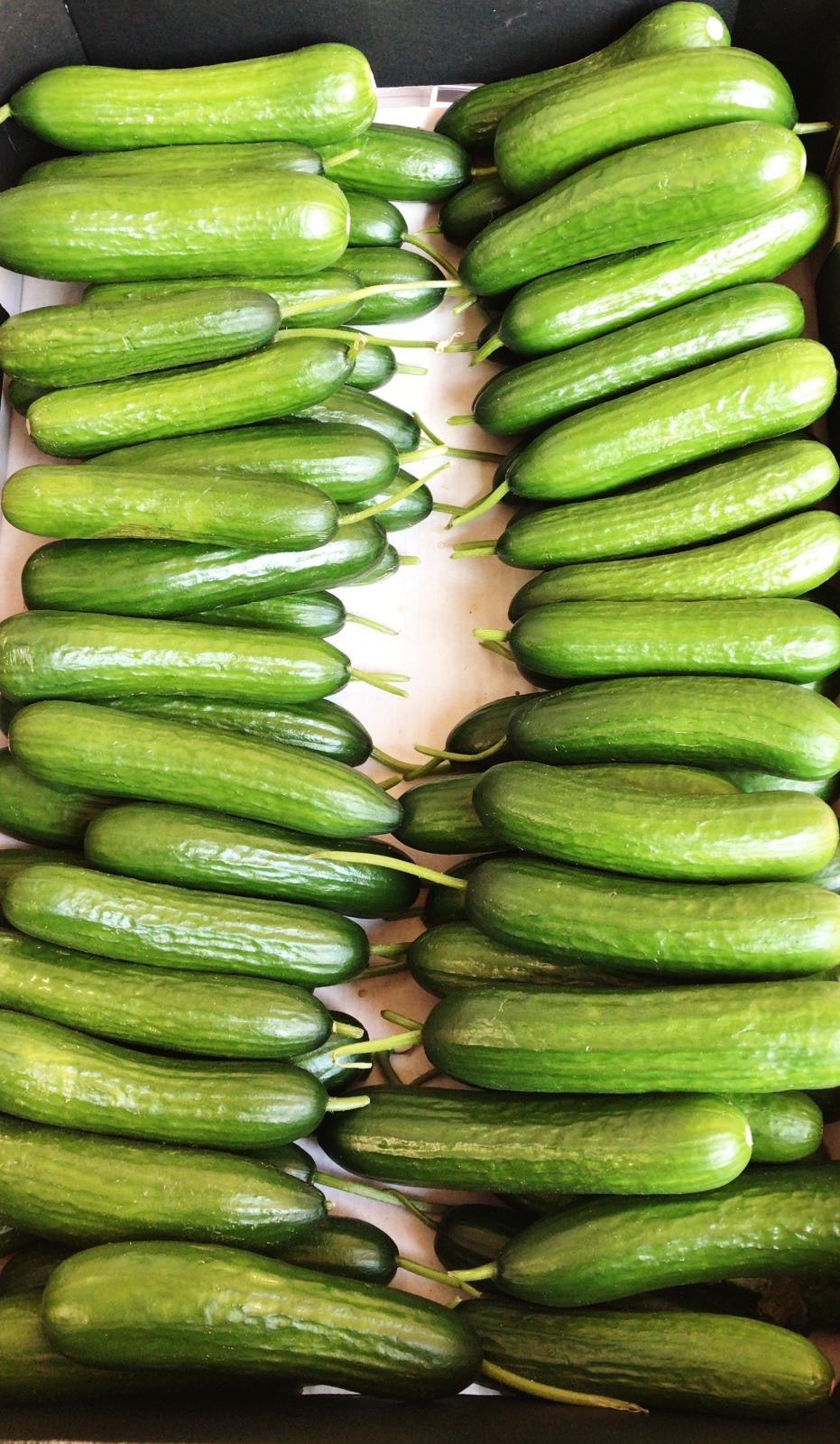 Baby cucumbers - 3kg