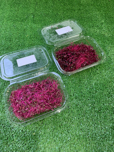 Micro red amaranth - Punnet