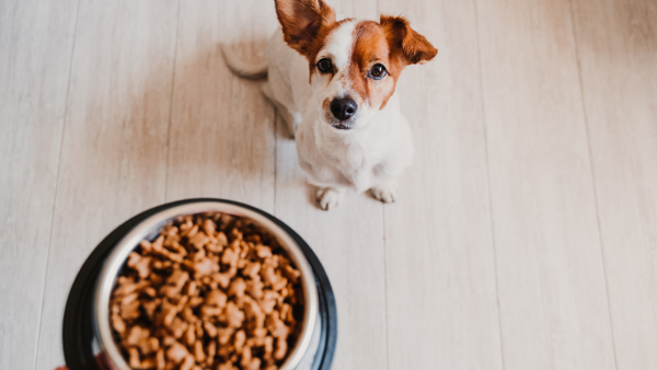 Appetite stimulation for dogs