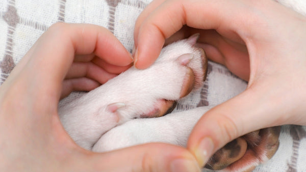Dog licking paws: Popular home remedies for paw care