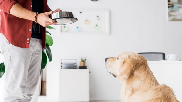 A dog owner brings his dog a bowl of dry food and oil.