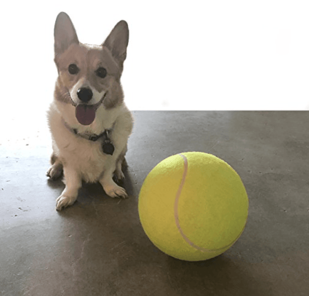 Humongous 9.5Inch Dog Tennis Ball, Giant Pet Toys for Dog, Chewing Toy For Dog Training. Also Used As A Mega Jumbo Kids Toy Ball - Chewy Dog Treats LLC