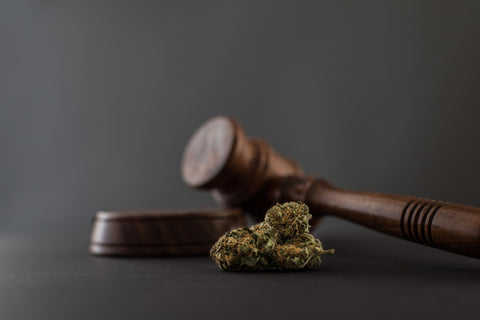 cannabis and gavel grey background