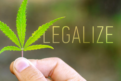 Green cannabis leaf in hand with inscription LEGALIZE.