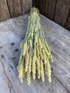 Triticum Frosted Yellow