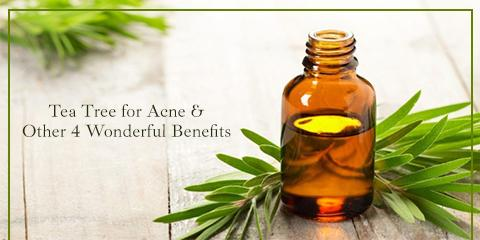 Tea Tree for Acne & Other 4 Wonderful Benefits