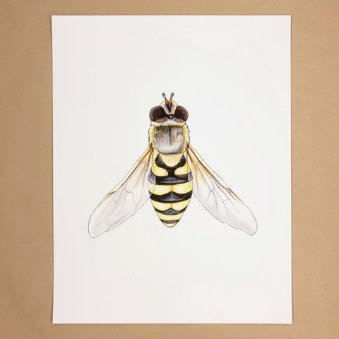 Hoverfly Print