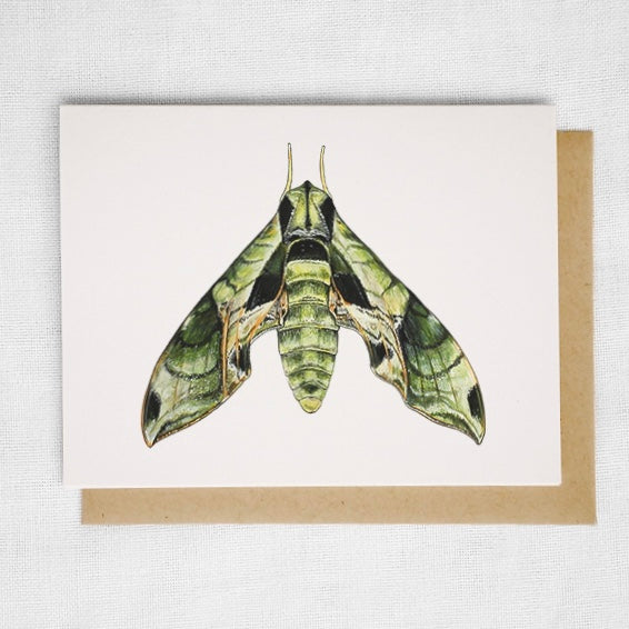 Pandora Sphinx Moth Card