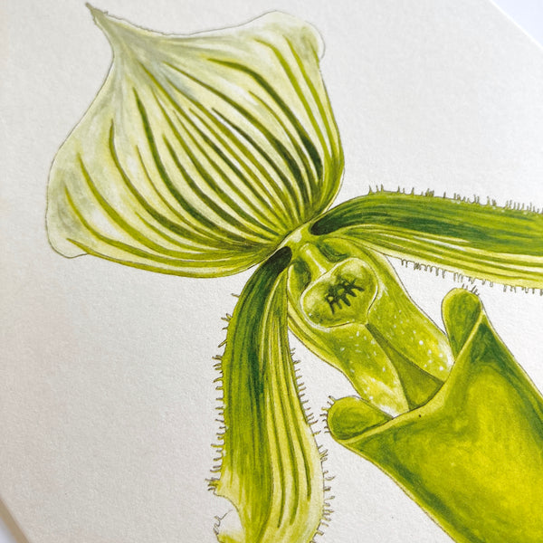 Lady Slipper Orchid Card