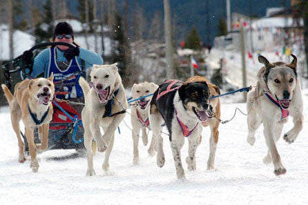 Dog Sled Tour - 2 Hours