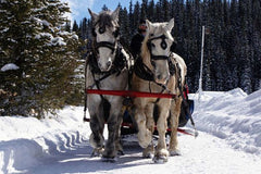 Sleigh Ride for 4. Unique Gifts