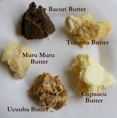 Butters Sampler and Packs - Bacuri, Cupuacu, Murumuru, Tucuma, Ucuuba. - Rainforest Chica  - 2