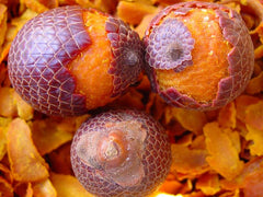 Buriti Oil - Rainforest Chica  - 11