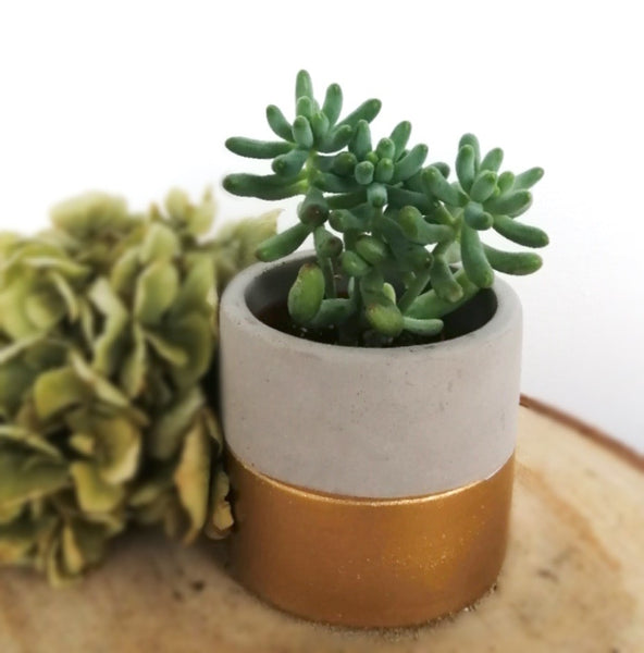 Mini cement gold dipped pot